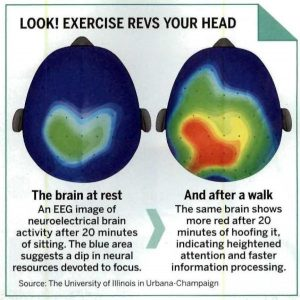 brain at rest and after walk